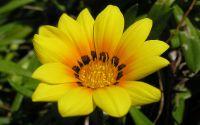 Цветок желтый