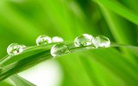 Роса на зеленой траве