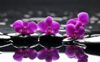 Спа камни и фиолетовые цветы