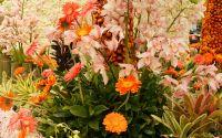 Полевые цветы, букет, растения
