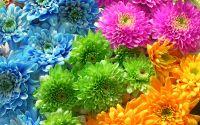 Радуга из цветов