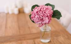 Цветок Пиона в стеклянной вазе.