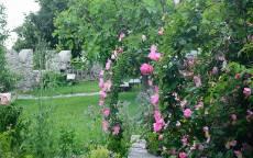 Роза Флорибунда в парке