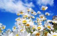 9-Flower
