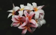Свежие цветы, черный фон, орхидея