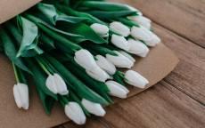 Цветы, букет, белые тюльпаны, пакет, доски