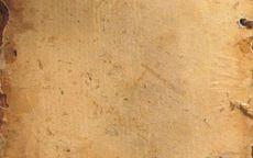 Текстура старая береста