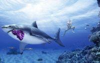Акула и трусы
