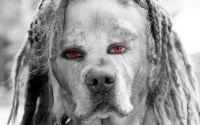 Собака с человеческими глазами