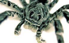 Макросъемка паук