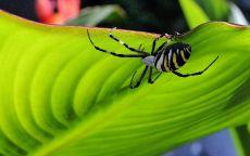 Черный паук на зеленом листе