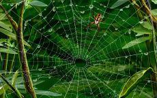 Экзотический паук