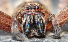Улыбка паука