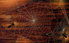 Два паука на паутине