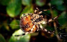 Макрофото паук плетет паутину