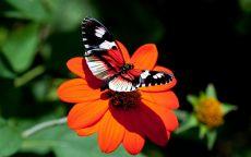 Красные цветок и бабочка