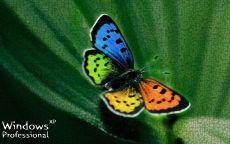 Бабочка Widows