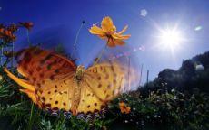 Бабочка как цветок