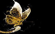 Пивная бабочка