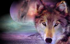 Ночь волков