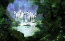 Табун белых лошадей