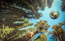 Воздушный шар летит над соснами, синее небо