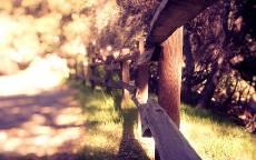 Деревянный забор, тропинка, лес