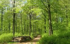 Лето, зеленый лес, тропинка, дрова