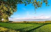 Весна, зеленое поле, голубое небо