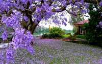 Весна, дом у озера, синие цветы на дереве, цветущее дерево