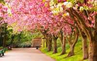 Весна, весенний парк, цветущие деревья
