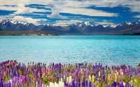 Весенние цветы на берегу голубого озера