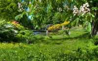 Весна, молодая зеленая трава