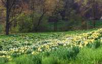 Красивые картинки весны
