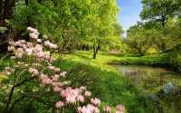 Весенний ручей, розовые цветы, молодая листва.