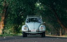Автомобиль, жук, багажник автомобильный, аллея