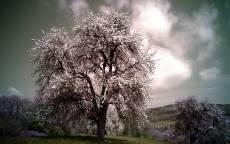 Негатив, природа, деревья, облака, поле, холмы