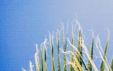 Голубое небо, зеленая трава, ветер