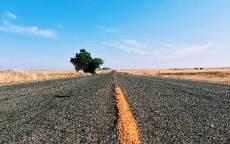 Дорога, асфальт, желтая разметка, одинокое дерево