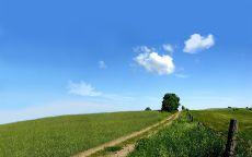 Проселочная дорога в зеленом поле.