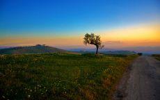 Одинокое дерево у дороги.
