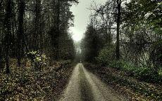 Дорога в осеннем лесу.