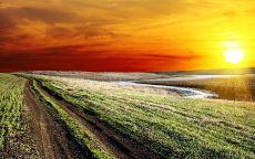 Грунтовая дорога в поле.