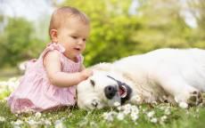 Маленькая девочка играет с собакой в зеленой траве