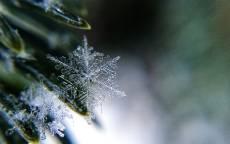 Заморозок, еловые иголки, снежинки