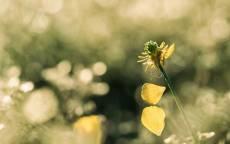 Цветок, паутина, поле, трава