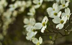 Весна, белые цветы, цветение