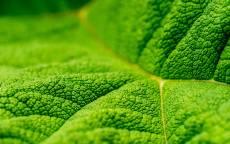 Зеленый лист под микроскопом