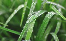 Трава, лист, роса, капля, вода, зеленый