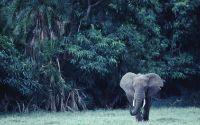 Слон и джунгли